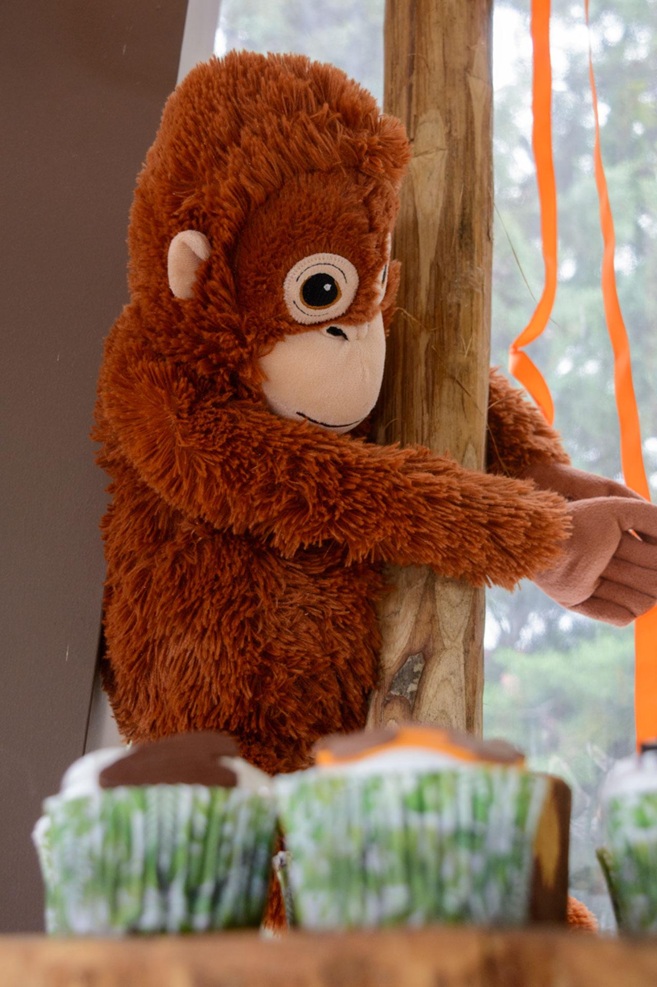 οι αγαπημένες μαϊμουδίτσες του Κωστή